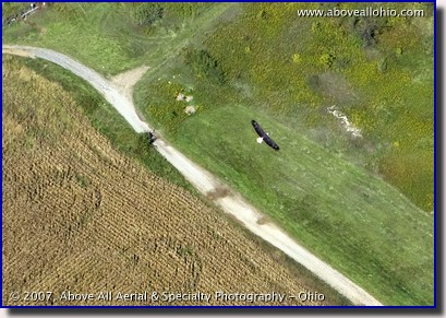 Aerial photograph of a Bald Eagle flying in Ohio