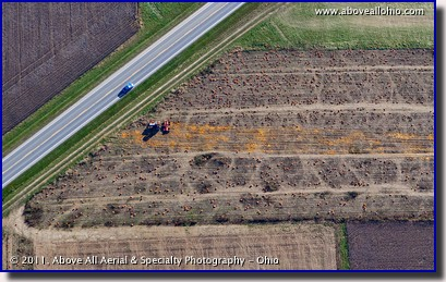 Aerial view of a pumpkin farm crushing leftover pumpkins in the field after halloween; near Wooster, OH