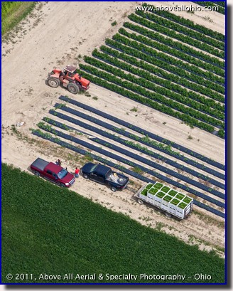 A steep oblique aerial photo of farmers with freshly harvested green peppers in a field near North Fairfield, OH.